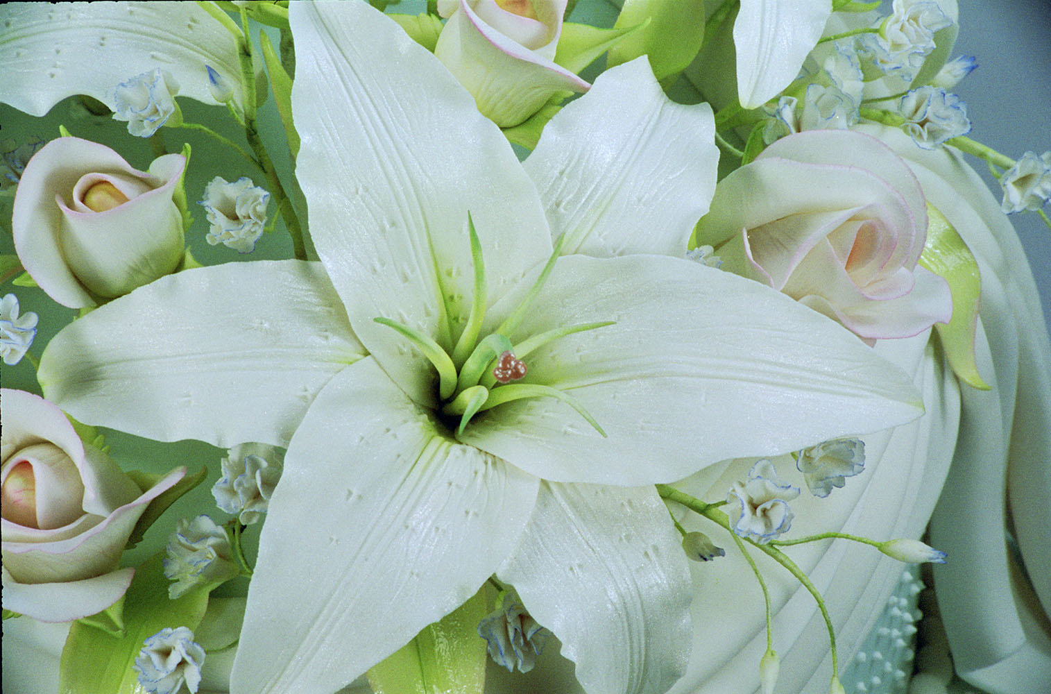 Casablanca lily petal world of sugar art sku v22 category flower petal and leaf veiners tags flowers veiners izmirmasajfo