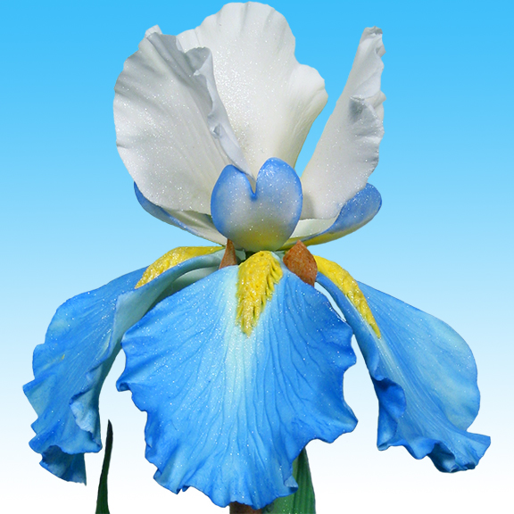 Bearded Iris in Sugar