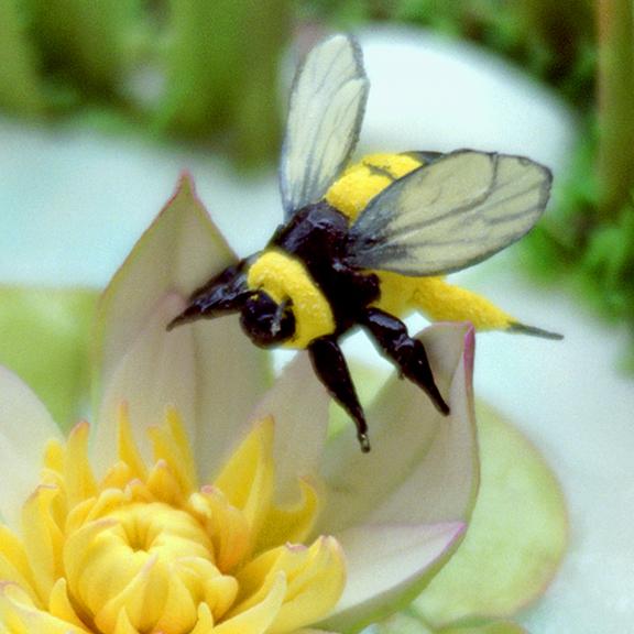 Bee Wings in Sugar