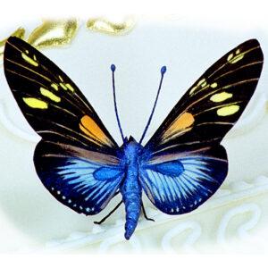 Doris Butterfly in Sugar