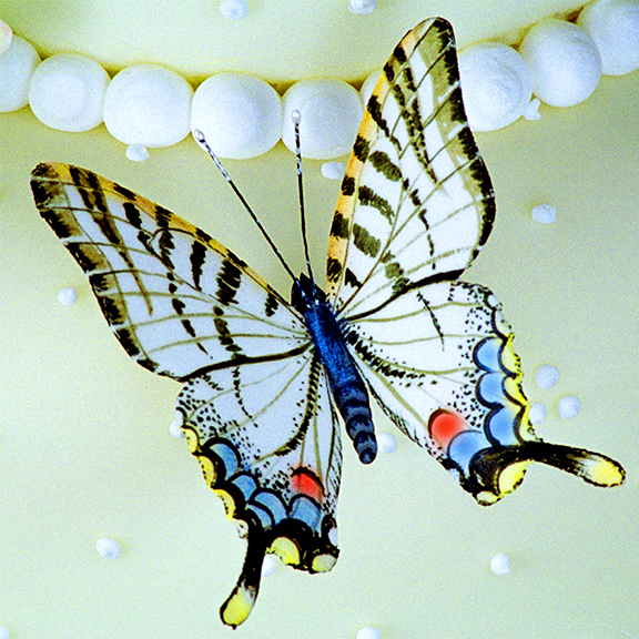Swallowtail Butterfly in Sugar