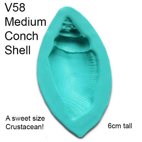 Medium Conch Shell